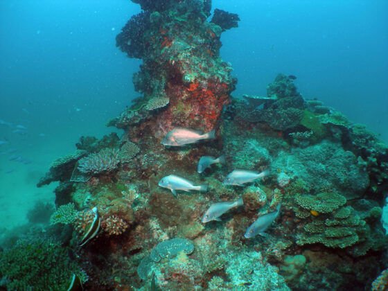 Complexity is key: fish diversity and tropical inshore seascapes