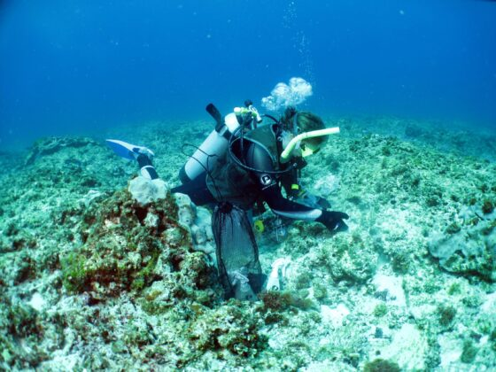 Cyclones drive connectivity of reef fish populations