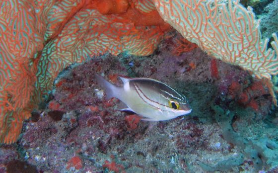 Mix of marine zones matters most for prey fish