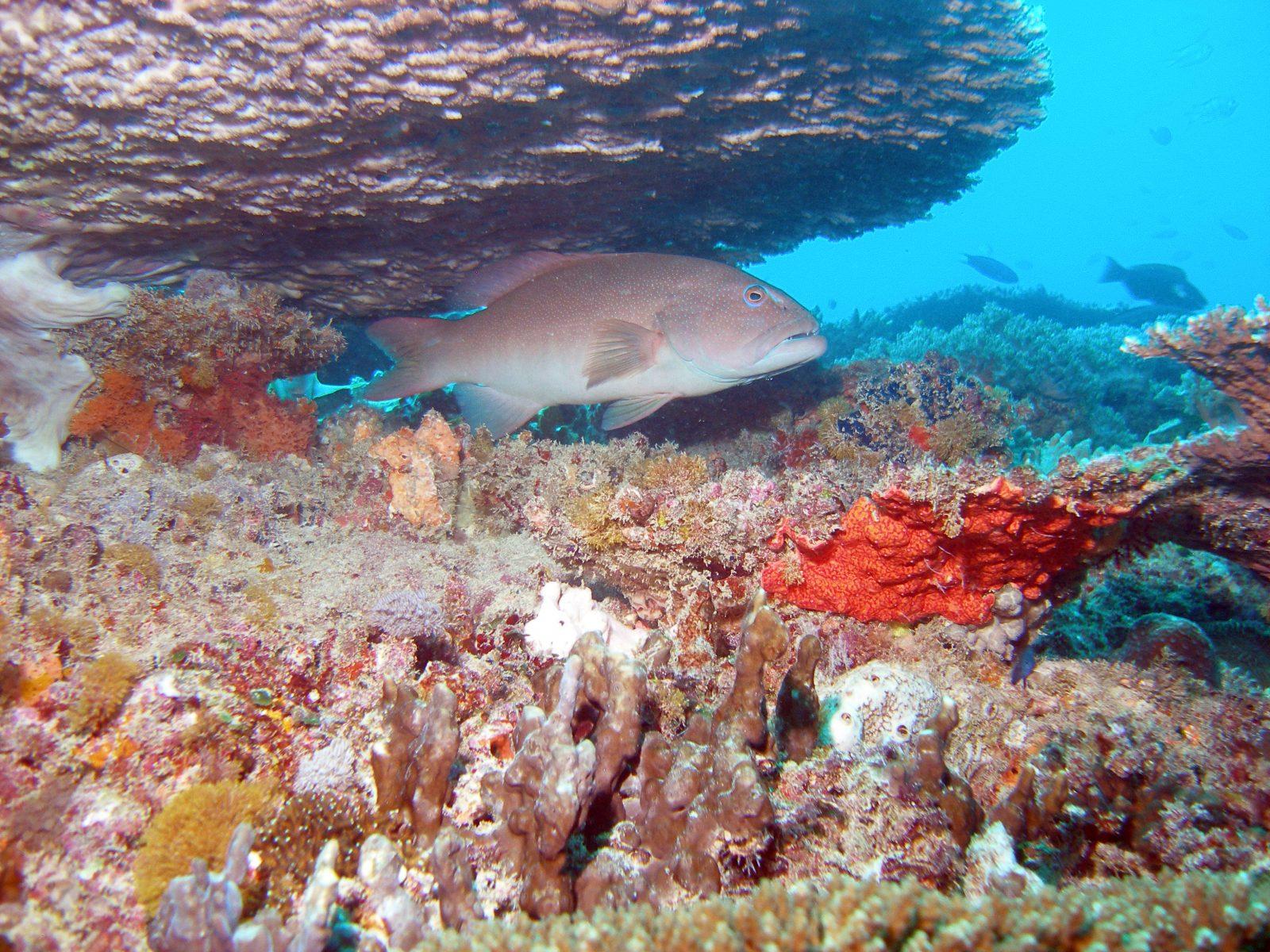 examples of our study species  u2013 reef  u0026 ocean ecology lab