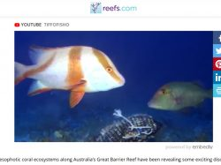 Amazing diversity of reef fish in waters of over 100m deep on the GBR