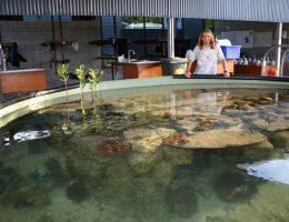 Touch tank & dive bay at JCU's Orpheus Island Research Station